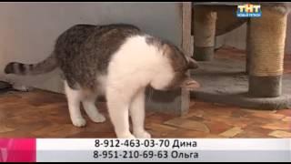 Кошка Муха