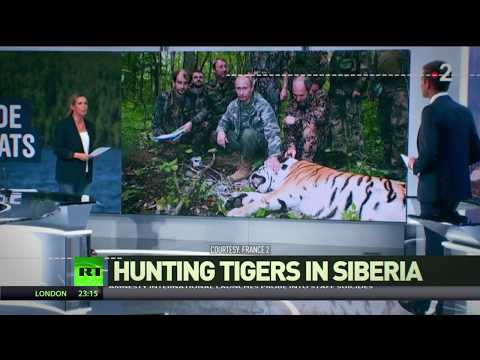 'How to lose credibility in 2min': Assume Putin hunts tigers in Siberia