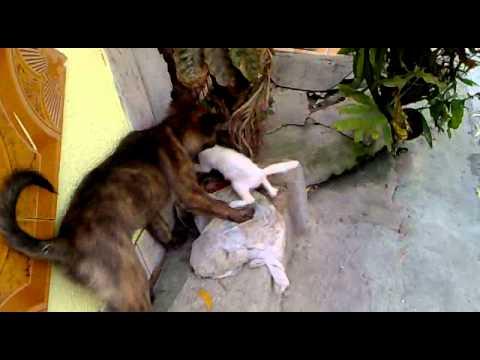Dog Kills Cat Youtube