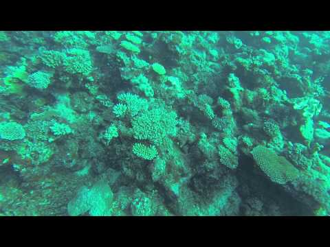 Fiji Dream House dive pt 1/3