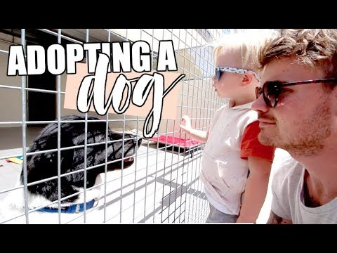 ADOPTING A DOG   VISITING A RESCUE SHELTER
