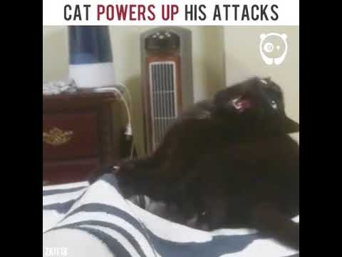 Cat powers up his attack | Funny Vines Cats 10