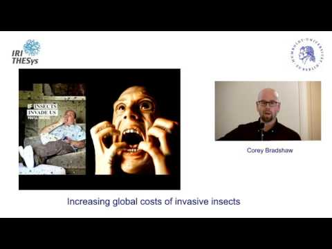 Increasing global costs of invasive insects - by Corey Bradshaw - 19.11.2015