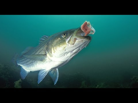5 Best Ways To Catch Stripers In Ca Aquaduct