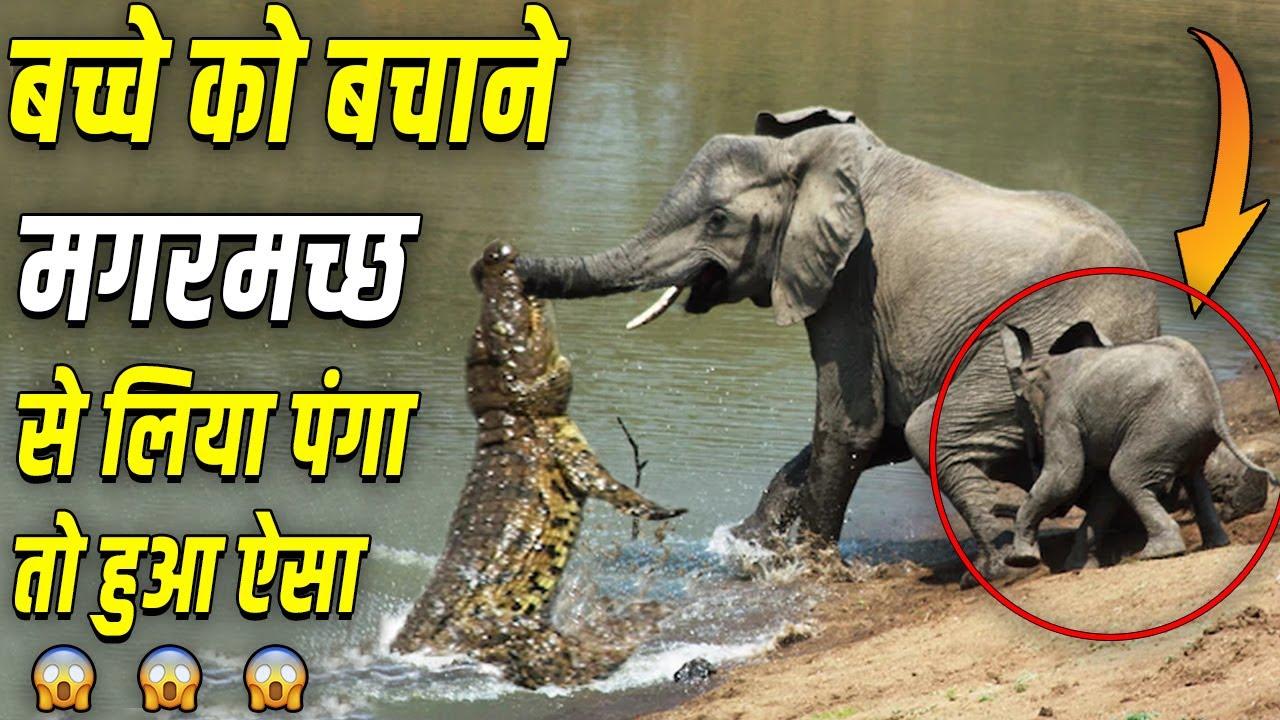 बच्चे को बचाने के लिए, जान पर खेल जाते ये जानवर !!