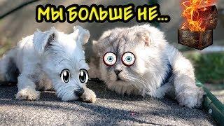 ПОМОГИТЕ!!! КОТ КЕВИН БОЛЬШЕ НИКОГДА НЕ СМОЖЕТ ГОВОРИТЬ!