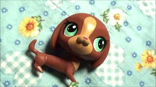 Lps Limited Edition Dachshund In Toys R Us Collector Pack