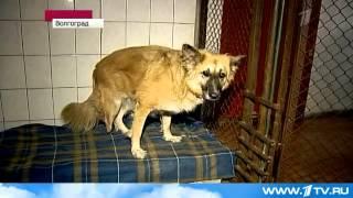 В Волгограде закрывают приют для животных!
