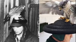 """How an """"F Hat"""" Helped Save a Species"""