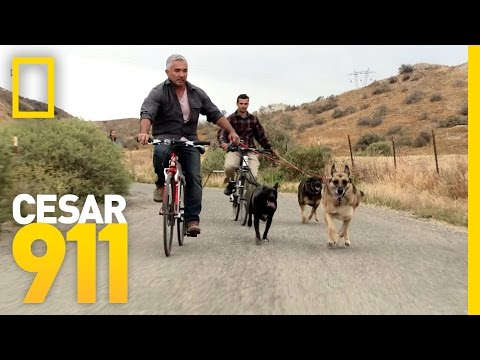 All Three Trouble Makers In Sync | Cesar 911
