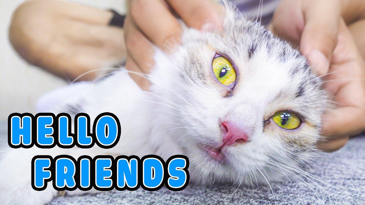 New Friend | FunCat - Meow Meow
