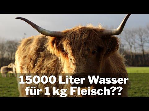 Verbraucht Fleisch wirklich 15000 Liter Wasser pro kg?