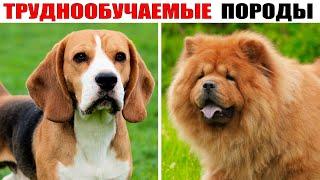 7 Самых ТРУДНООБУЧАЕМЫХ Пород Собак в Мире