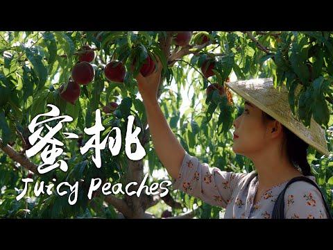 「一席一果」水蜜桃——夏日里染上的蜜桃香【滇西小哥】