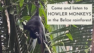 Find Out How Loud Howler Monkeys REALLY Are