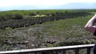 Кобулети, Грузия: Кобулетские охраняемые территории (фото, видео)(Кобулети -- обширная природоохранная территория, тянется она по побережью Черного моря. Общая площадь приро..., 2014-05-18T19:55:47.000Z)