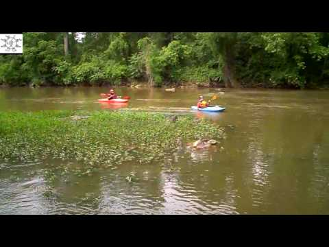 Kayakers On Haw River At Highway 64 NC
