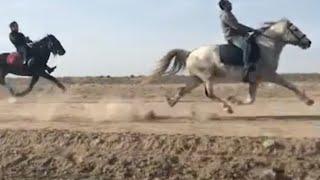 Yorga Atlar (Gence)