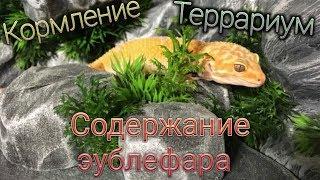 СОДЕРЖАНИЕ ПЯТНИСТОГО ЭУБЛЕФАРА/КОРМЛЕНИЕ/ТЕРРАРИУМ