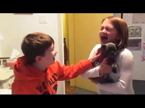 Christmas Puppy Surprise Compilation 2016 - 2017 [NEW]