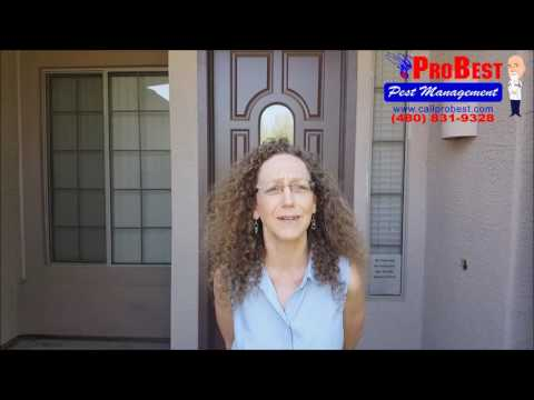 Spider Control Reviews / Testimonials in Gilbert, AZ ( Exterminators )