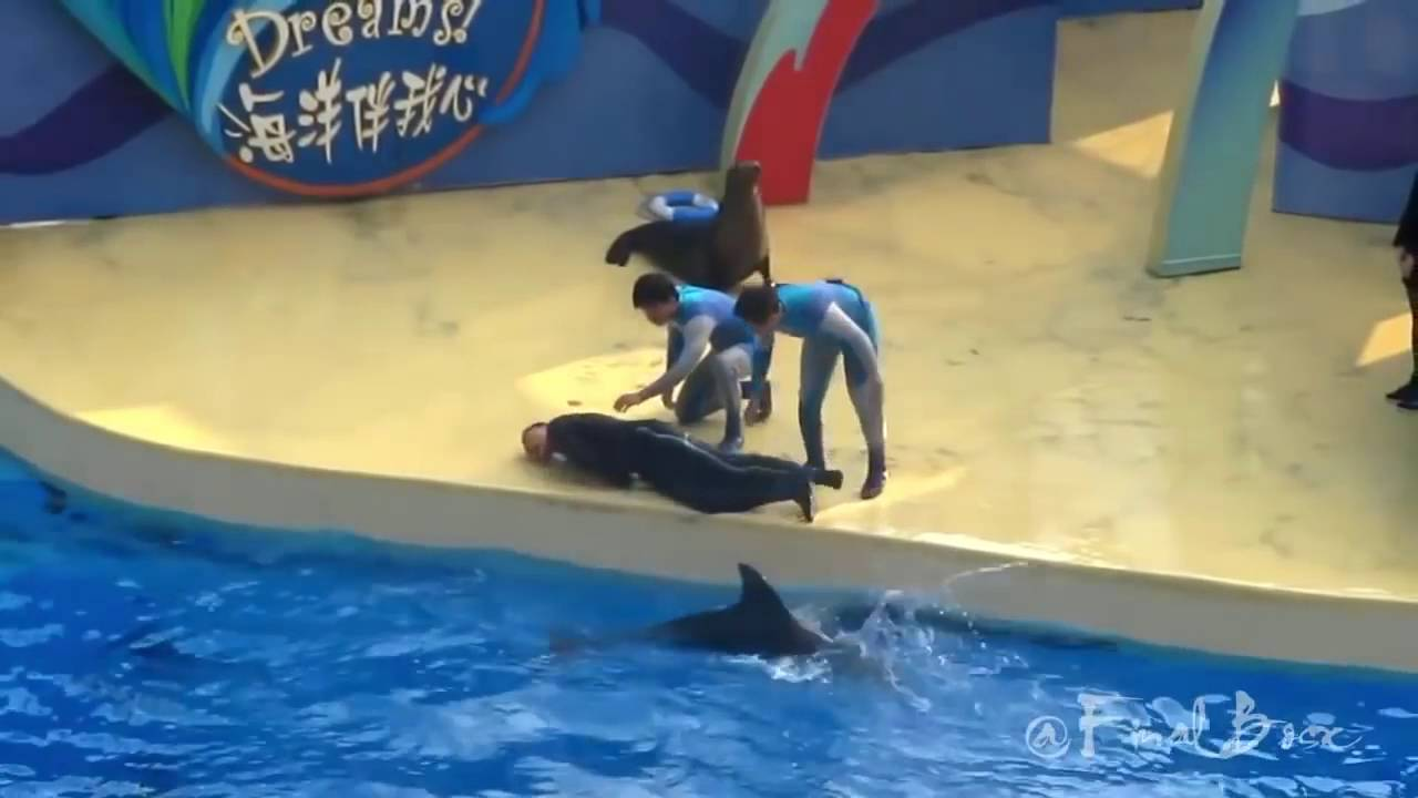 Dolphin Saves Girl From Drowning - Youtube-2386