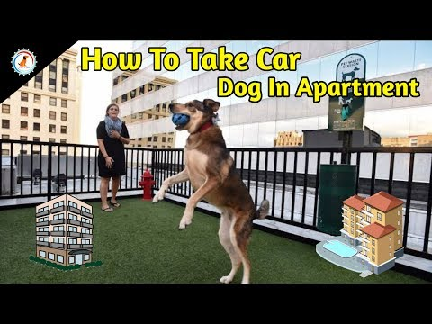 how to take care of dog in apartment / Best Dog Breeds For Apartment Living