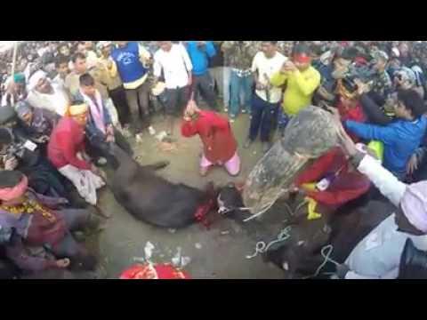 Cruel Animal killing