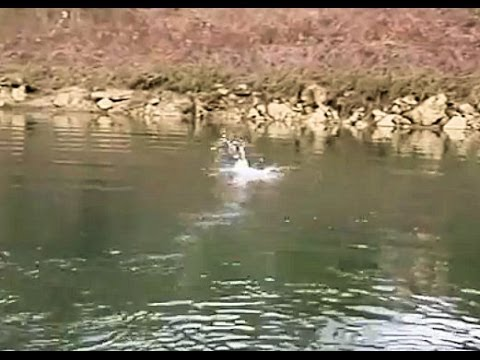 Fly fishing the clinch river brown trout taking a streamer for Clinch river fishing