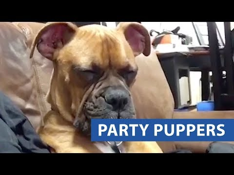 Party Pups