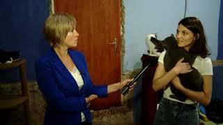 Всемирный День Бездомных Животных - интервью юриста А. Комагиной