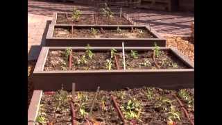 Building A Raised Bed For Gardens