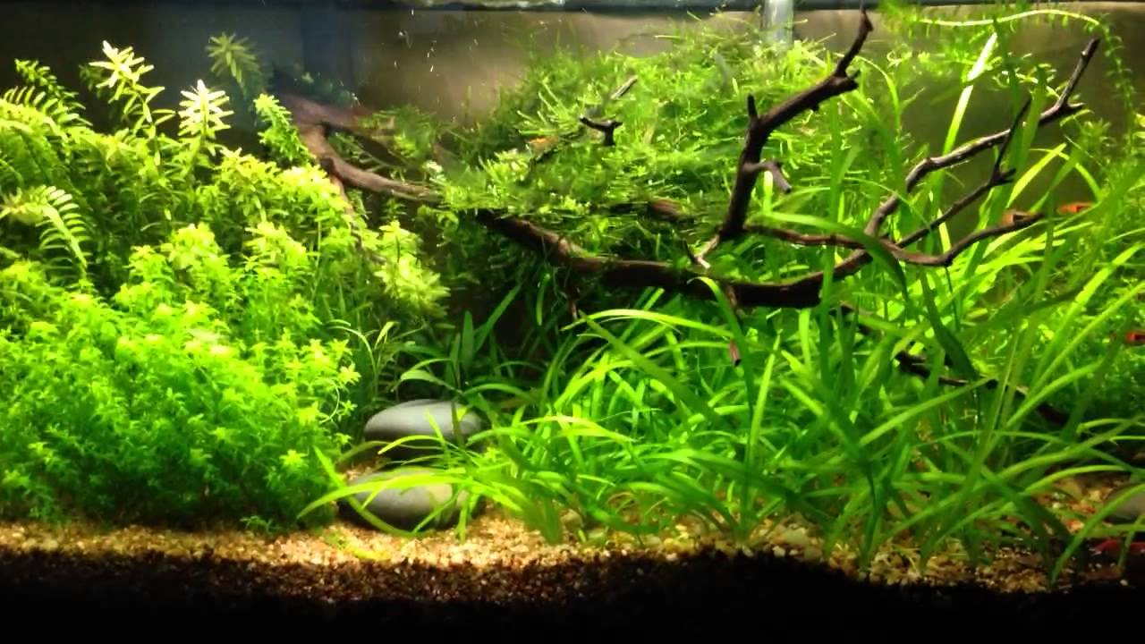 & Low tech tank dry fertilizer dosing - YouTube azcodes.com