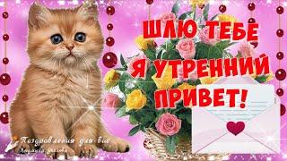 🌺 Шлю Тебе я Утренний Привет! 🌺Улыбнись, тебе идет твоя Улыбка! 🌺 Позитивчик для друзей!