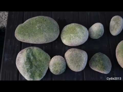 Easiest Way To Remove Algae On Rocks And Ornaments