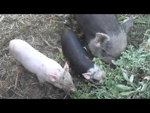 Какой травой можно кормить кроликов, а какой нет