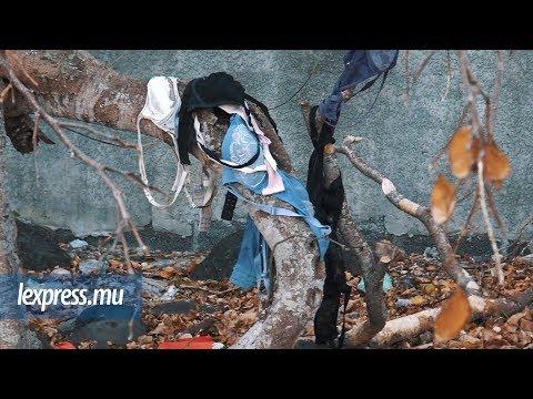 Anse-La-Raie: l'arbre qui porte des… soutiens-gorge