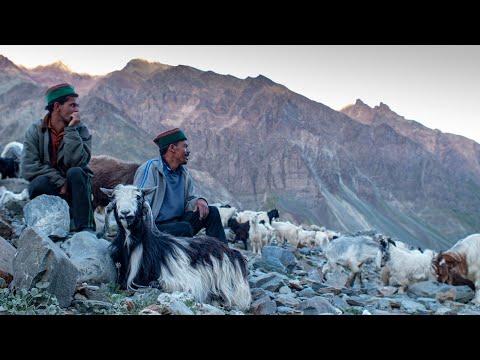 A Shepherd's Life | Conversations with a Himalayan Shepherd