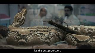 Aegon #iDecide initiative (Python) film by DDB Mudra Group