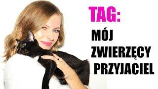 TAG: MÓJ ZWIERZĘCY PRZYJACIEL czyli o adopcji kota i Kirosławie słów kilka