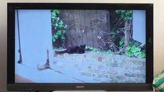 Sampson the black cat sitting on the wall