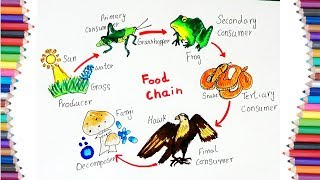 "HOW TO DRAW ""FOOD CHAIN"" DIAGRAM FOR KIDS"