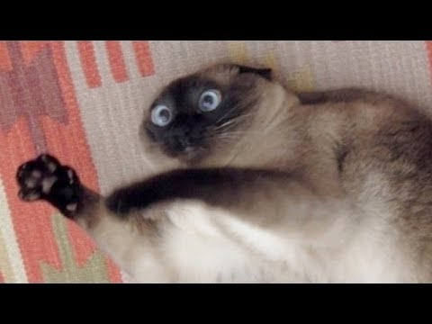 WATCH THIS and the UNSTOPPABLE LAUGH WILL ATTACK YOU - Best FUNNY ANIMAL videos