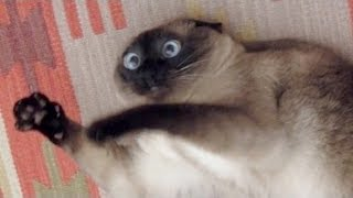 WATCH THIS and the UNSTOPPABLE LAUGH WILL ATTACK YOU - Best FUNNY ANIMAL videos thumbnail