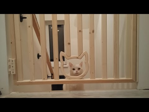 DIY Baby Gate / Homemade Baby Gate For Stairs / How To Make Baby Gate With Passage For Cat
