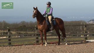 ex racehorse Isis 1st ridden schooling