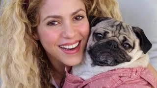 Shakira & Doug The Pug (Barcelona)
