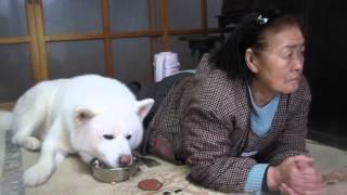 今日もみんなの朝食に出遅れたげんき、一緒に遊んでくれるお婆さんは8...