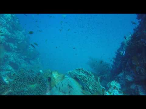 Soft Corals, Banner Fish