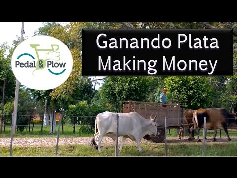 Ganando Plata, Making Money in Paraguay
